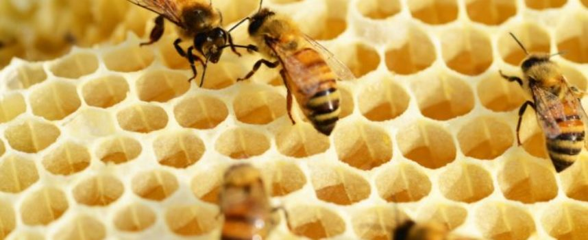 Salviamo api e agricoltori. Slow Food aderisce all'iniziativa dei cittadini europei