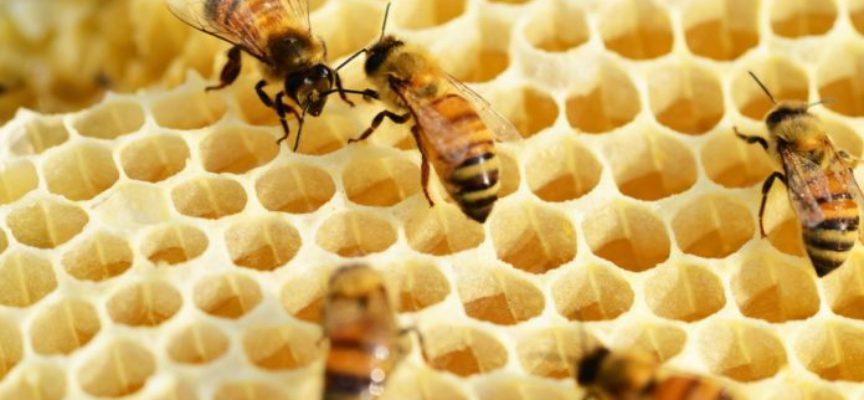 """I cambiamenti climatici """"sballano"""" il comportamento delle api…anche in Toscana"""