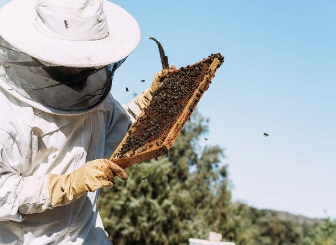 Miele a picco. In Toscana nel 2019 produzione in calo dell'85%