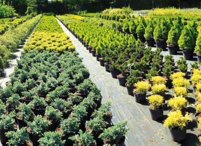Passaporto delle piante, la nuova disciplina fitosanitaria europea