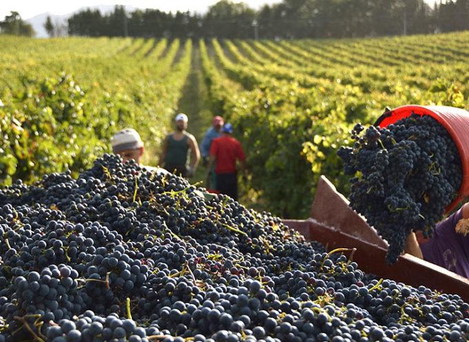 Indennità per la disoccupazione agricola. Domande entro il 31 marzo