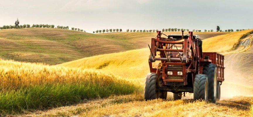Annata agraria 2019 a Grosseto. Troppi segni negativi e ombre scure all'orizzonte