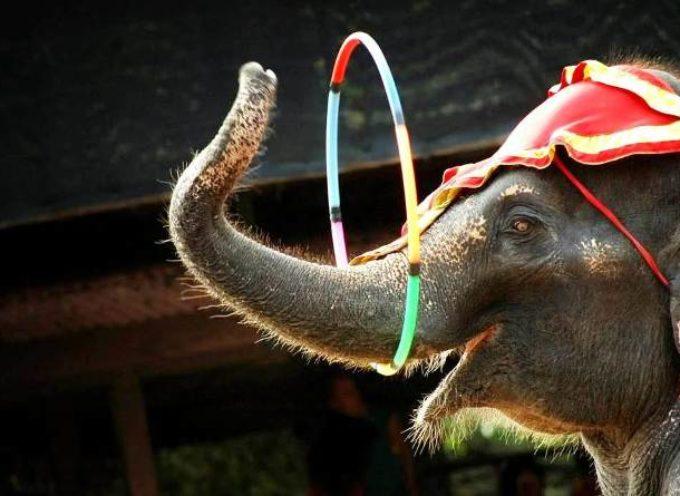 LUCCA – 2° presidio conto il circo con animali