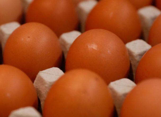 Uova fresche biologiche ritirate per rischio microbiologico