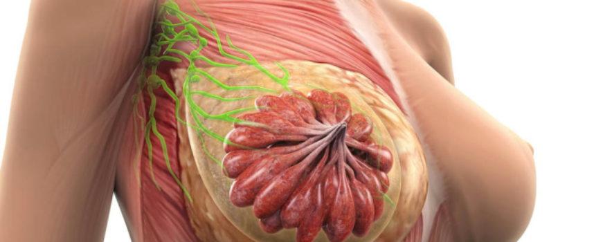 tumore al seno, il 'Progetto Elisa' a sostegno delle giovani donne