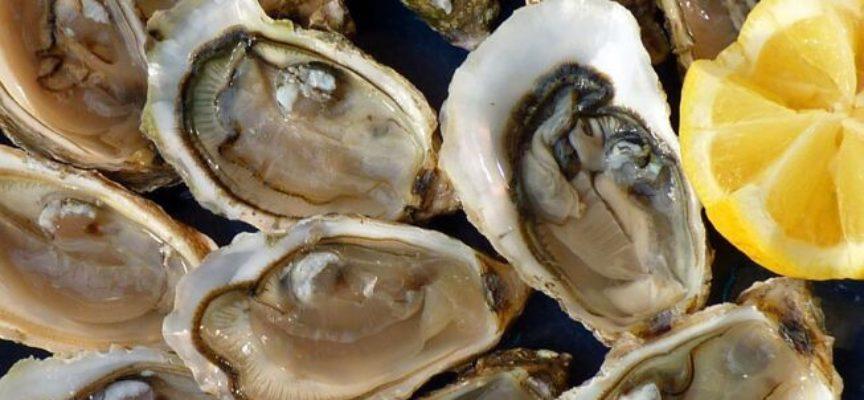 Ostriche contaminate, sale allerta UE: c'è il norovirus anche in molluschi provenienti dalla Francia.