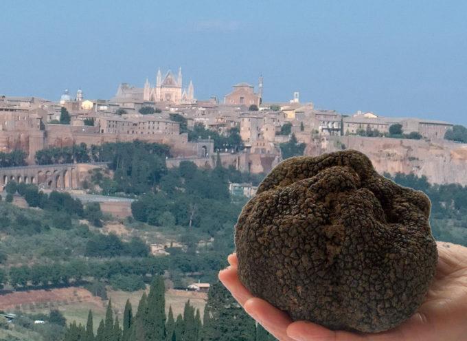 Agricoltura: tartufaie in Toscana, abilitazioni e introiti