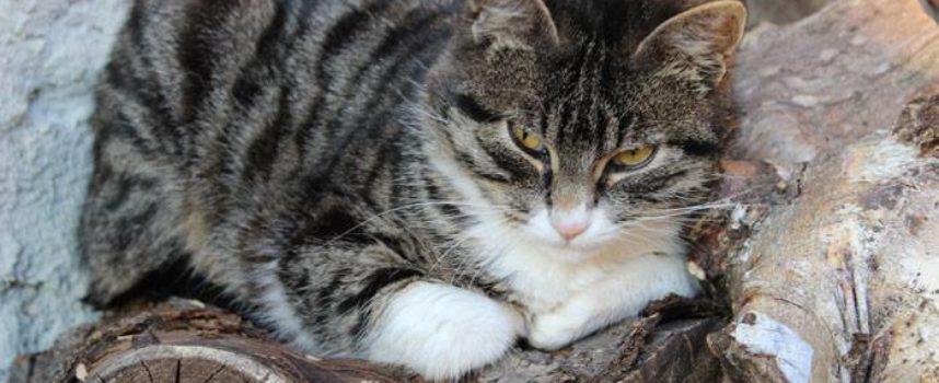 Oggi, 17 Febbraio, è la festa del gatto, nata in Italia nel 1990.