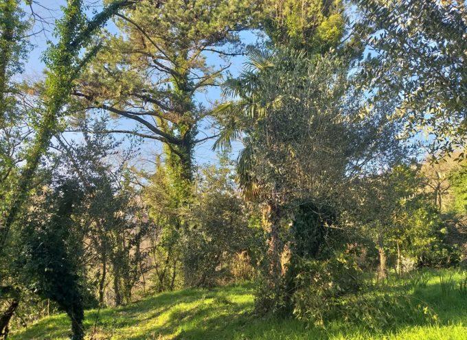 PATRIZIO ANDREUCCETTI – SOTTOTITOLO: LA MIA RIFLESSIONE DELLA DOMENICA