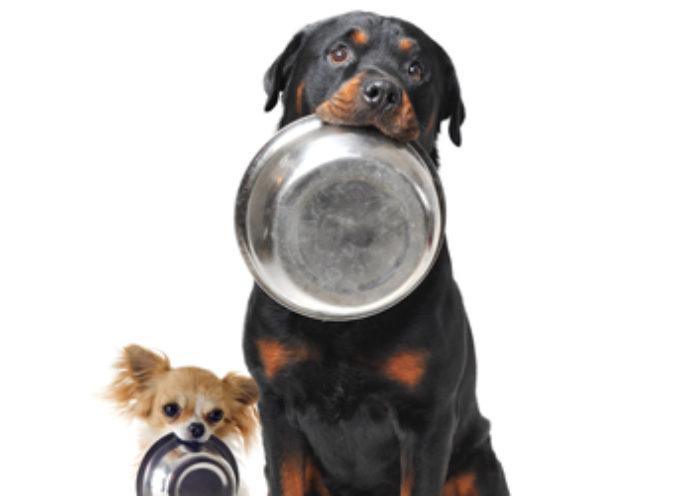 """Una troupe televisiva viene attirata da un gruppo di cani che """"imploravano"""" cibo con una ciotola vuota tra i denti"""