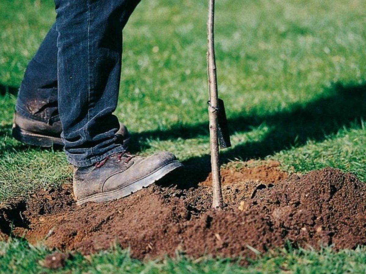 Come Piantare Il Mango come piantare un albero da frutto   verde azzurro – notizie