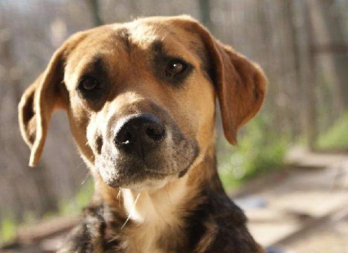 """Il suo umano l'ha abbandonata perché troppo """"affezionata"""": ora questa cagnolina è riuscita a trovare una nuova famiglia"""