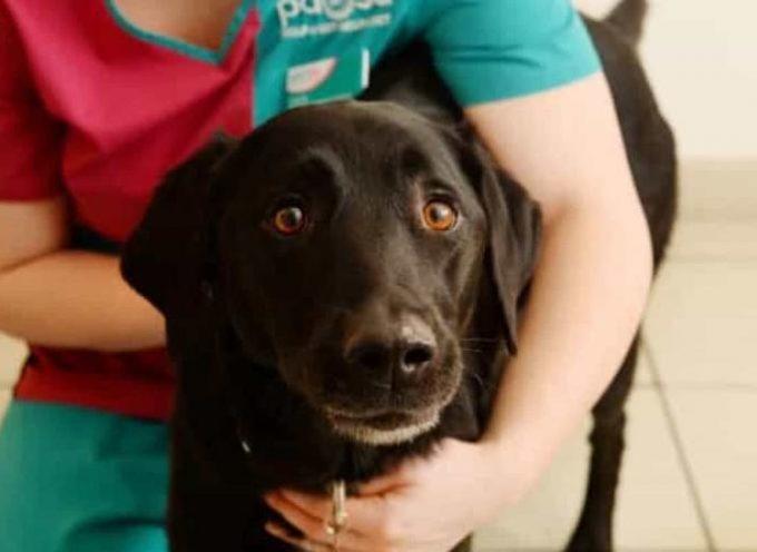 Dodger, il cane che è diventato il migliore amico di tutti gli anziani ospiti di una casa di riposo