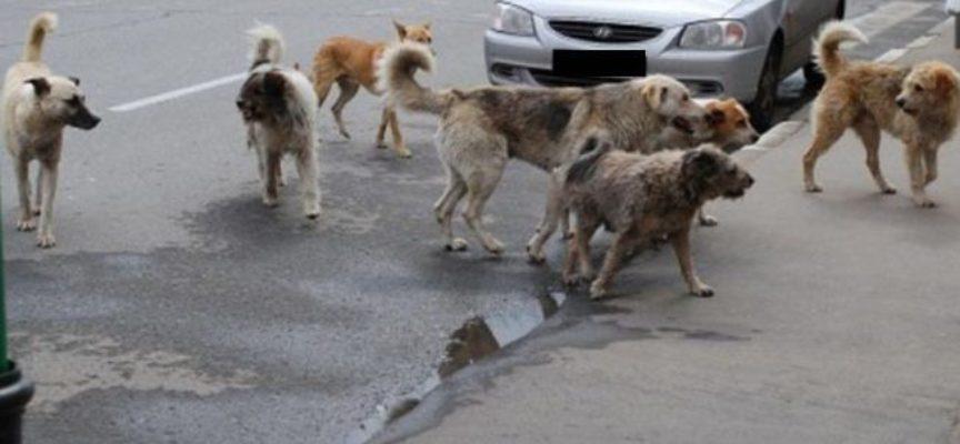 in funzione il servizio di cattura  cani vaganti
