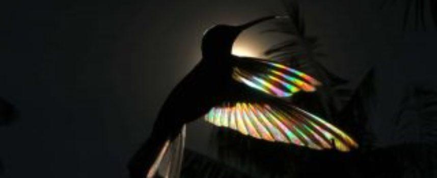 Questo fotografo è riuscito a catturare un «arcobaleno di colibrì». Una meraviglia della natura.
