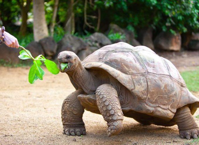 Recuperate tartarughe marine morte lungo la costa toscana