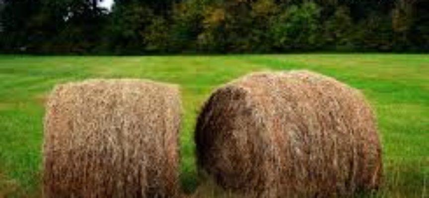 Politiche agricole europee. La Toscana a fianco delle Comunità rurali