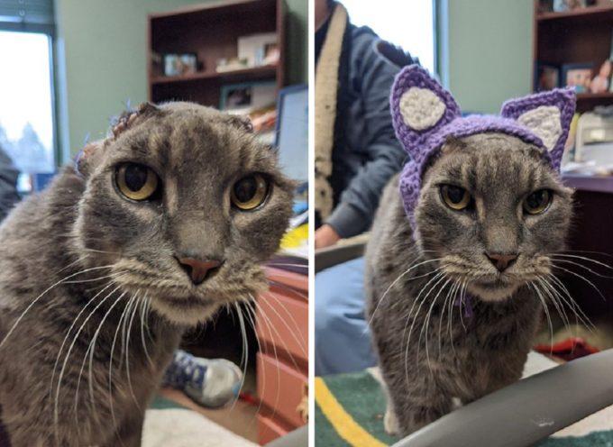 Gattina di strada con le orecchie amputate ne riceve un paio all'uncinetto e una nuova famiglia