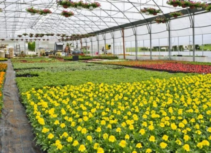 Florovivaismo toscano, solo 6.500 ettari valgono un terzo del fatturato agricolo toscano.