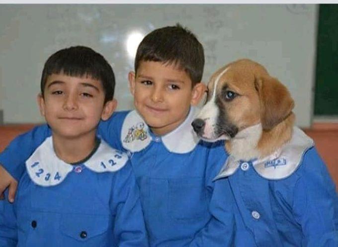 Un cucciolo di cane randagio viene adottato da una scuola: gli alunni si responsabilizzano prendendosene cura