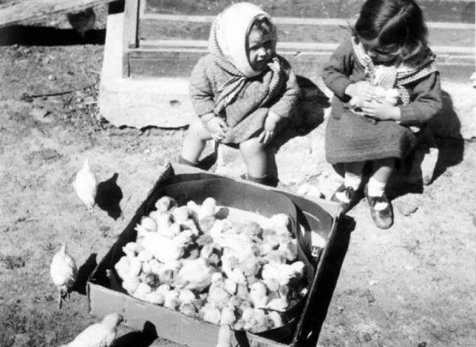 Nuova vita nel pollaio.