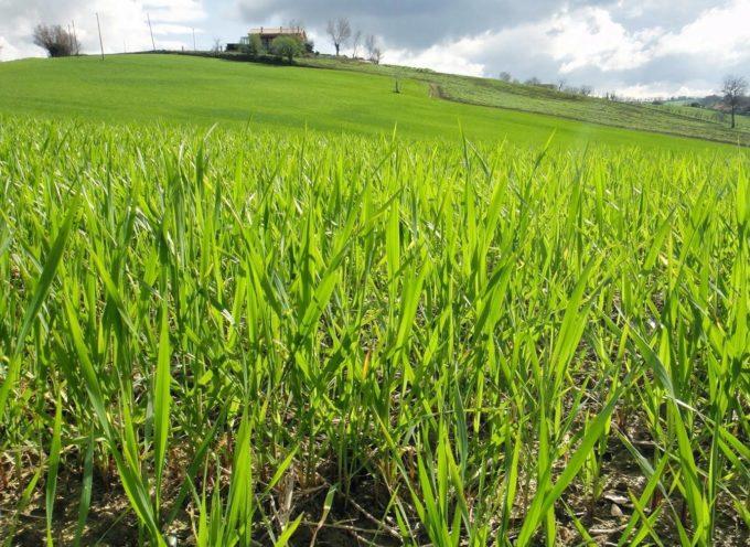 Il verde è il colore della vegetazione, della rinascita primaverile e della vita stessa.