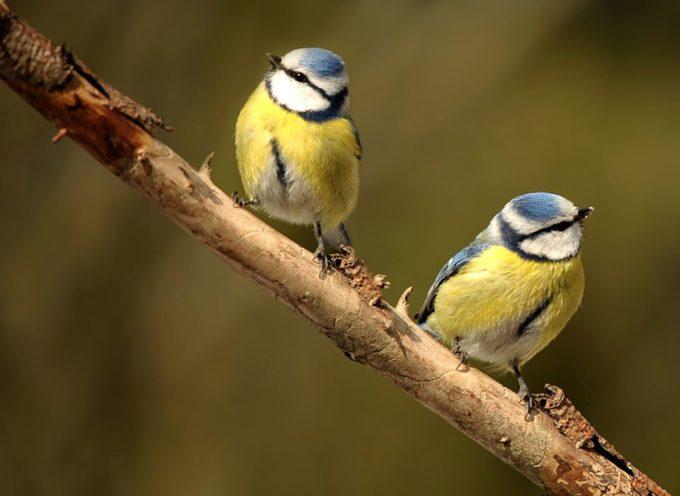 Uccelli a primavera…
