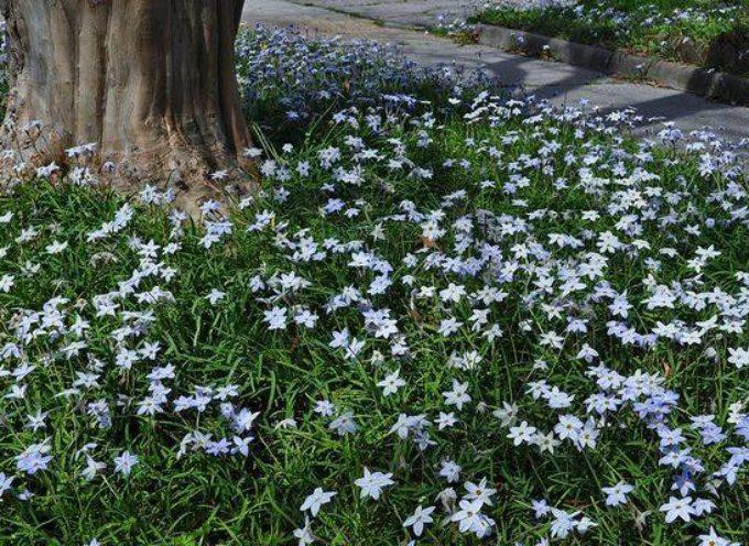 I piccoli fiori di primavera.