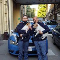 volante della polizia trovano due cagnolini fuggiti dalla loro casa
