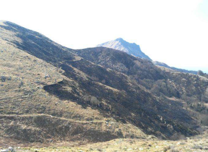 Spento l'incendio di Camaiore, consumati 18 ettari