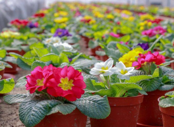 Cia Toscana: apre il florovivaismo. Vendita di piante e fiori nei vivai, boccata d'ossigeno per il settore