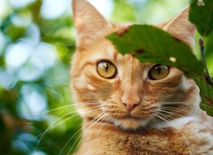"""Questo gatto si presenta ogni giorno a casa della sua """"fidanzata"""" ma lei lo respinge ogni volta"""