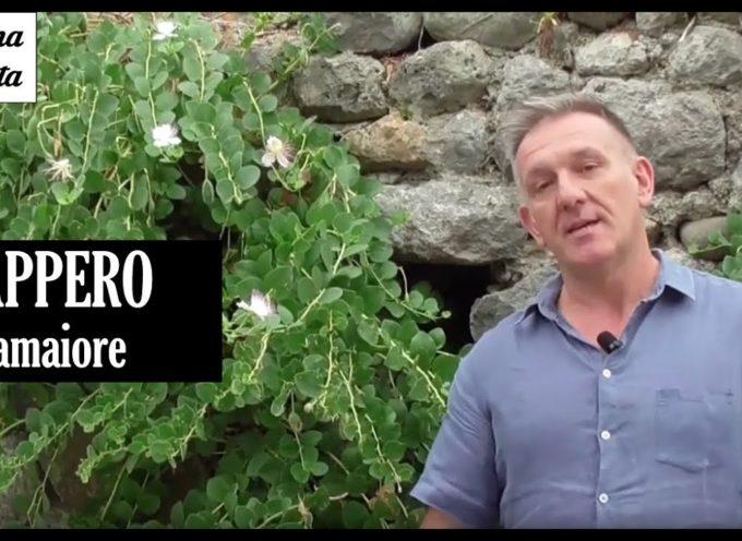 MARCO PARDINI – CI PARLA DELLA PIANTA DEL CAPPERO