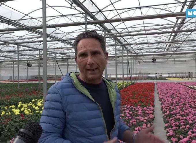 Vivai in ginocchio: milioni di piante invendute da buttare; appello al Governo
