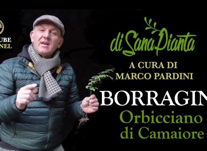 MARCO PARDINI CI PARLA DELLA PIANTA DELLA BORRAGINE