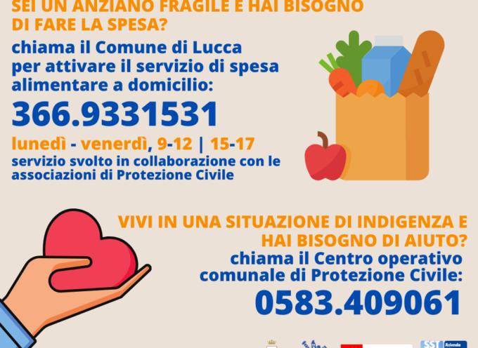 Spesa a domicilio: un servizio dedicato per gli anziani fragili dal Comune di Lucca
