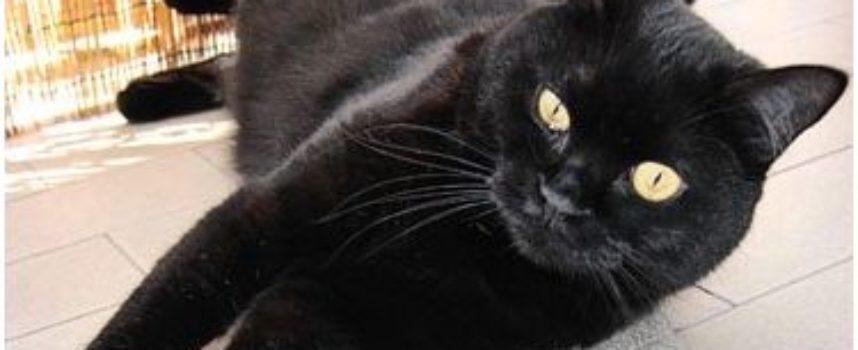 Questo micio randagio ha una voglia a forma di gatto nero sul muso che lo ha reso una vera celebrità del web