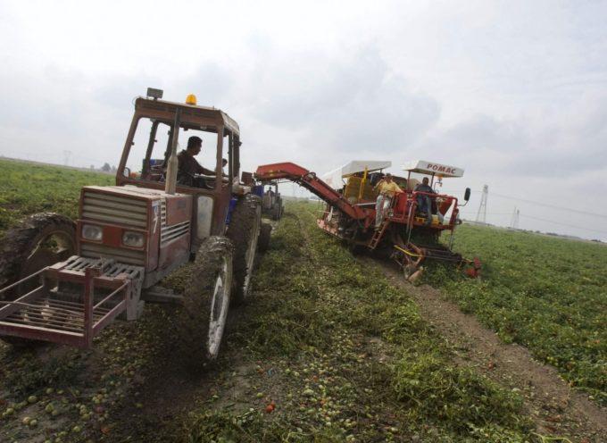 Le piccole aziende agricole vanno a picco