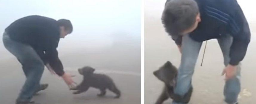 Un cucciolo di orso non smette di abbracciare l'uomo che l'ha salvato da un incendio boschivo