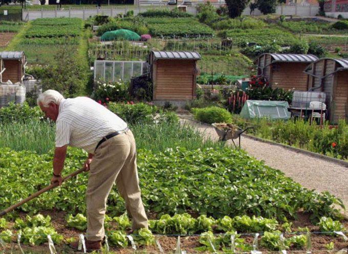 PER ATTIVITA' AGRICOLA AMATORIALE-  oggi è possibile spostarsi nel proprio comune o verso altri comuni:
