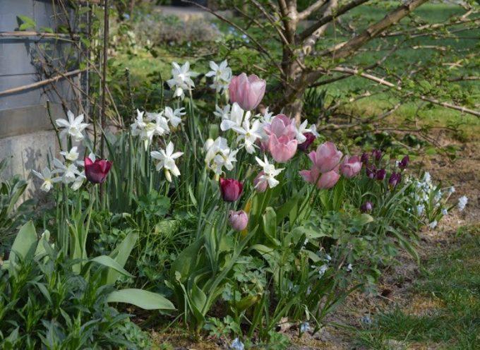 Le bulbose di Primavera.