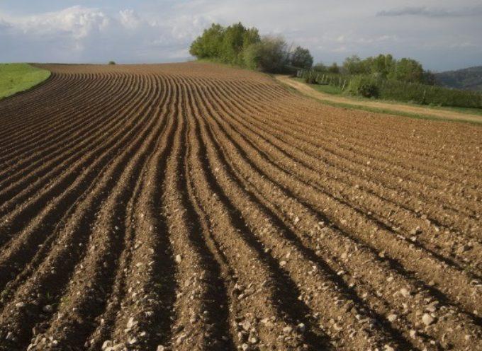 Nell'ultimo anno, secondo alcune stime, sono scomparsi 100mila ettari di terra coltivata,
