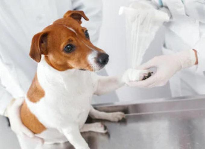 Gatti in coma etilico, cani ustionati con la candeggina: i veterinari mettono in guardia contro la disinfezione degli animali.