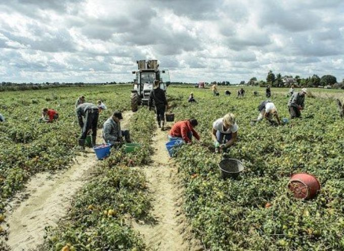 Marchetti: Nei campi chi ha il reddito di cittadinanza
