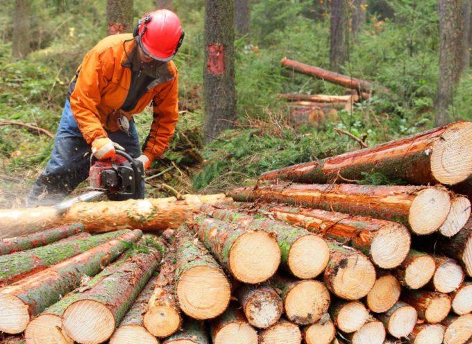 Coronavirus. Soddisfazione Cia: in nuovo DPCM riaprono le aziende forestali della Toscana