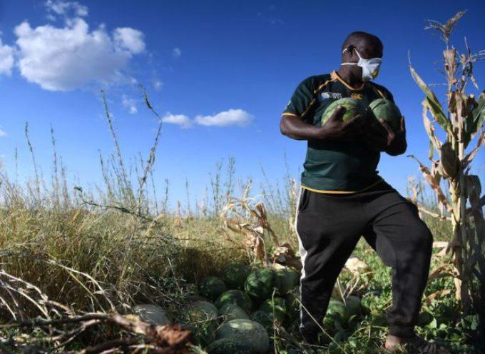 Carenza di lavoratori in agricoltura: la proposta per risolvere tre problemi tra immigrazione e giustizia