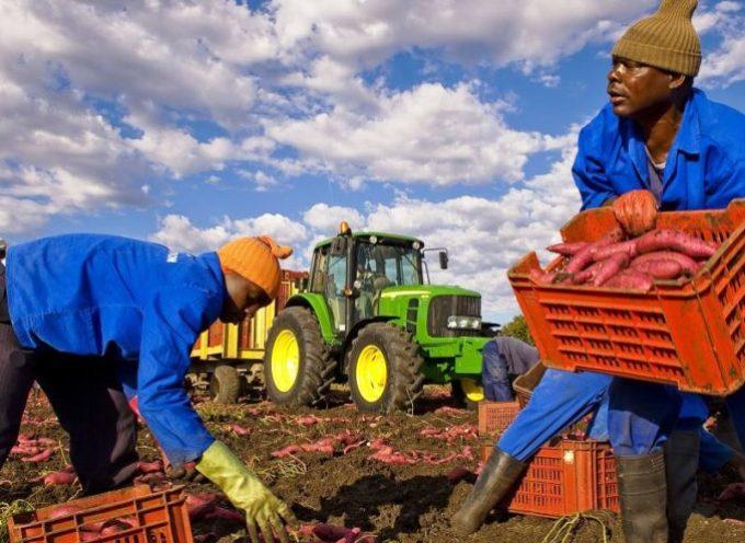 Agricoltura: 6500 italiani si offrono come braccianti, anche laureati