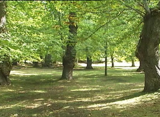 Approvato intervento da 9 milioni di euro per la salvaguardia delle foreste