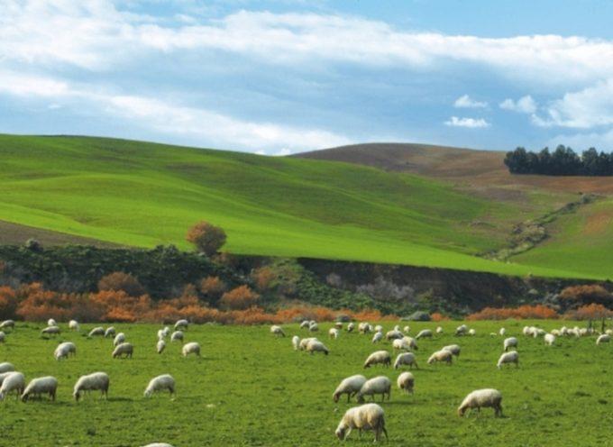 procedure più snelle e pagamenti veloci per i fondi del Piano di sviluppo rurale