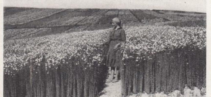 Il lino è la più antica fra le fibre vegetali.